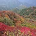 四国の山の紅葉(新居浜市の観光情報)